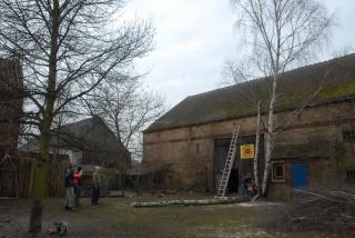 Baumfällarbeiten 1